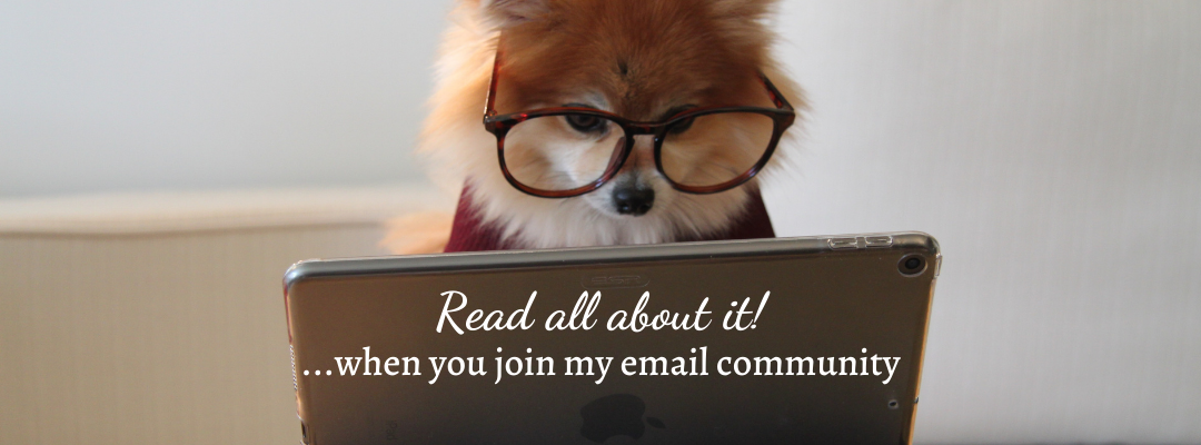 Cute Pomeranian checking out the latest newsletter